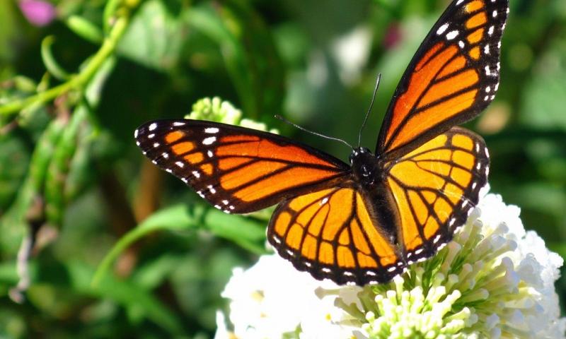 Metamorfosi RossoNera: da bruco a farfalla