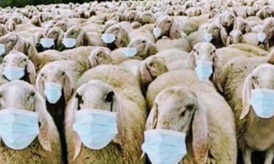Popolo di pecore!