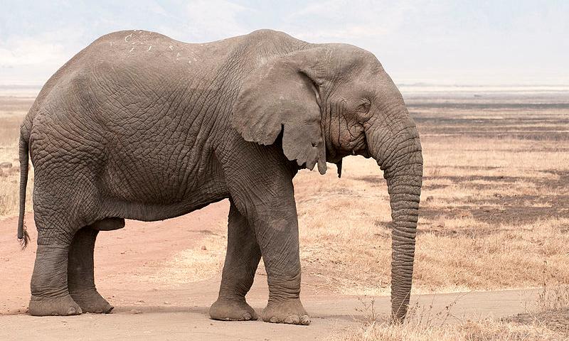 Inter: c'è un elefante in cucina