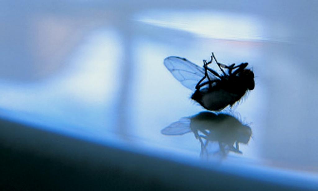 #BarVxL - La mosca indigesta